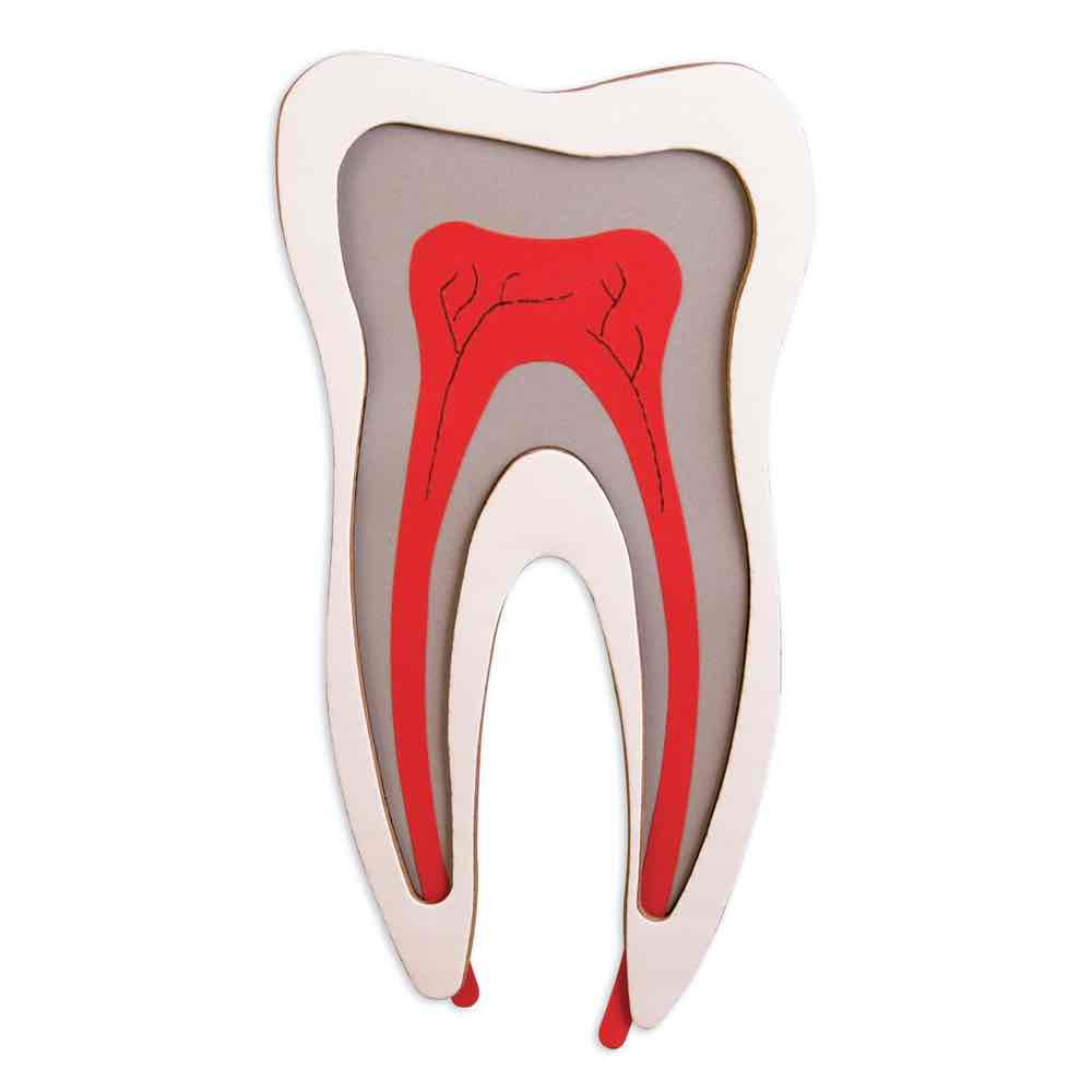 Tooth diagram accucut 3 d tooth diagram ccuart Choice Image
